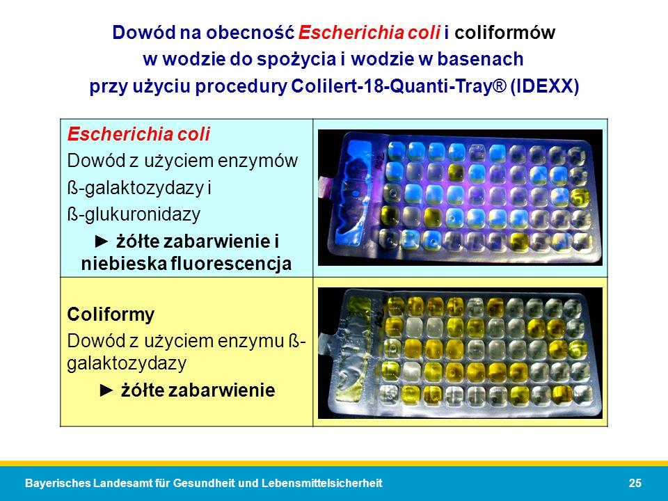 Dowód na obecność Escherichia coli i coliformów