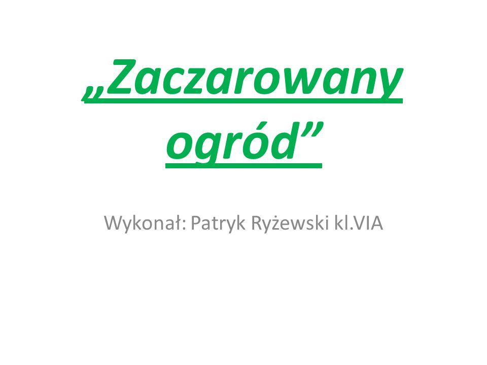 Wykonał: Patryk Ryżewski kl.VIA
