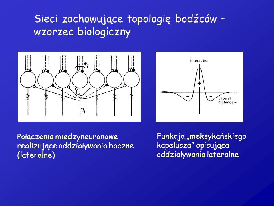 Sieci zachowujące topologię bodźców – wzorzec biologiczny
