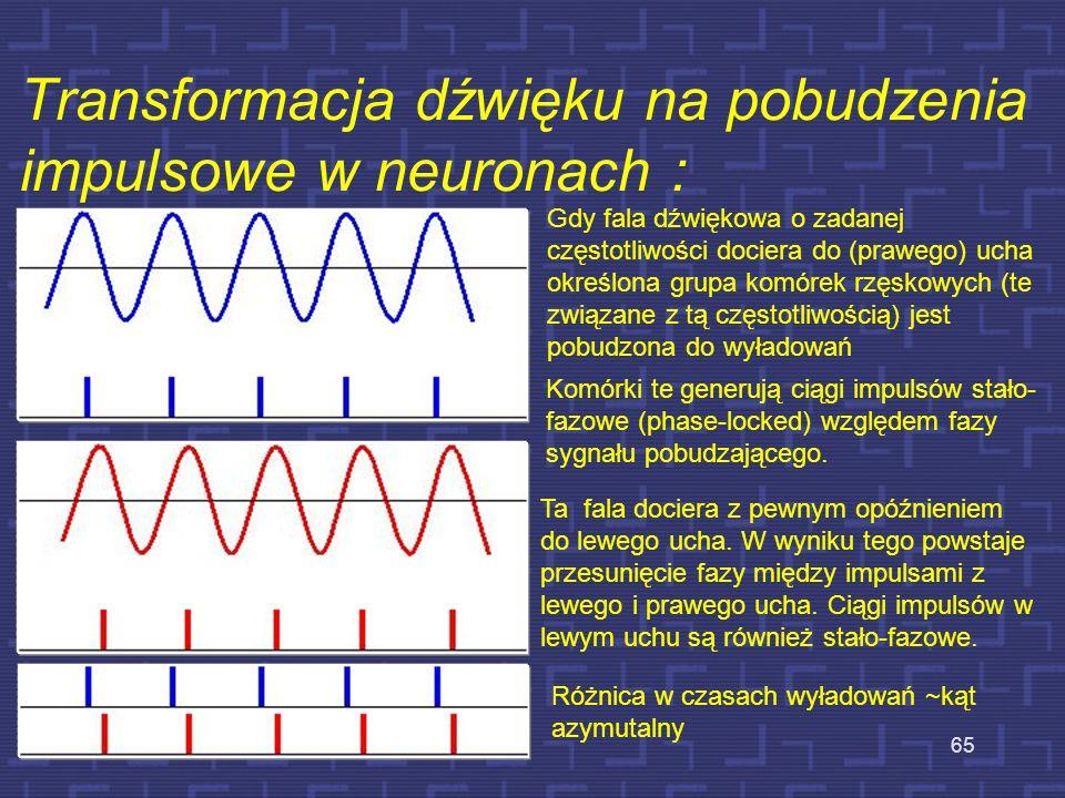 Transformacja dźwięku na pobudzenia impulsowe w neuronach :