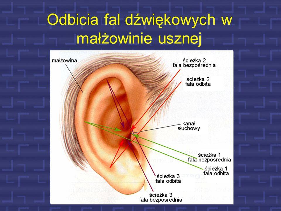 Odbicia fal dźwiękowych w małżowinie usznej