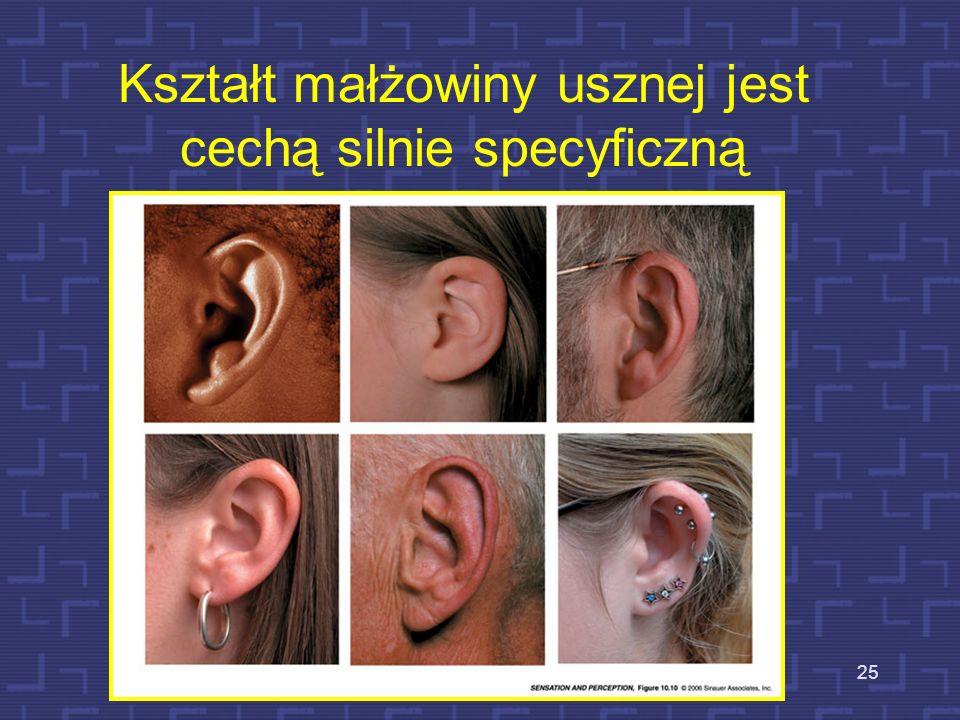 Kształt małżowiny usznej jest cechą silnie specyficzną