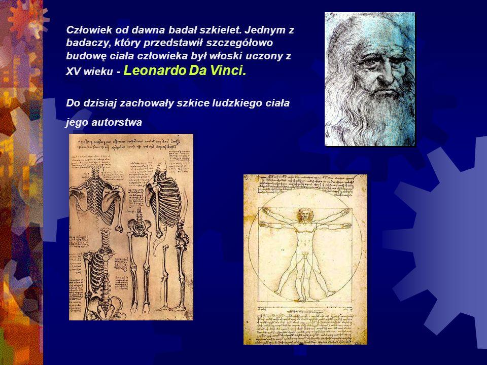 Człowiek od dawna badał szkielet