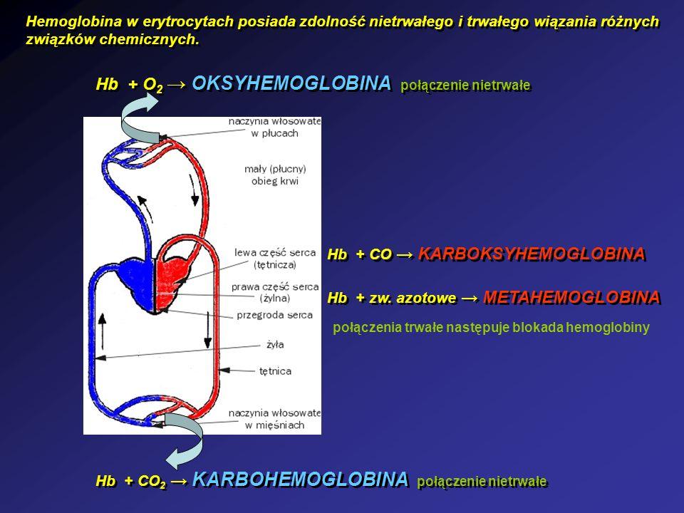 Hb + O2 → OKSYHEMOGLOBINA połączenie nietrwałe