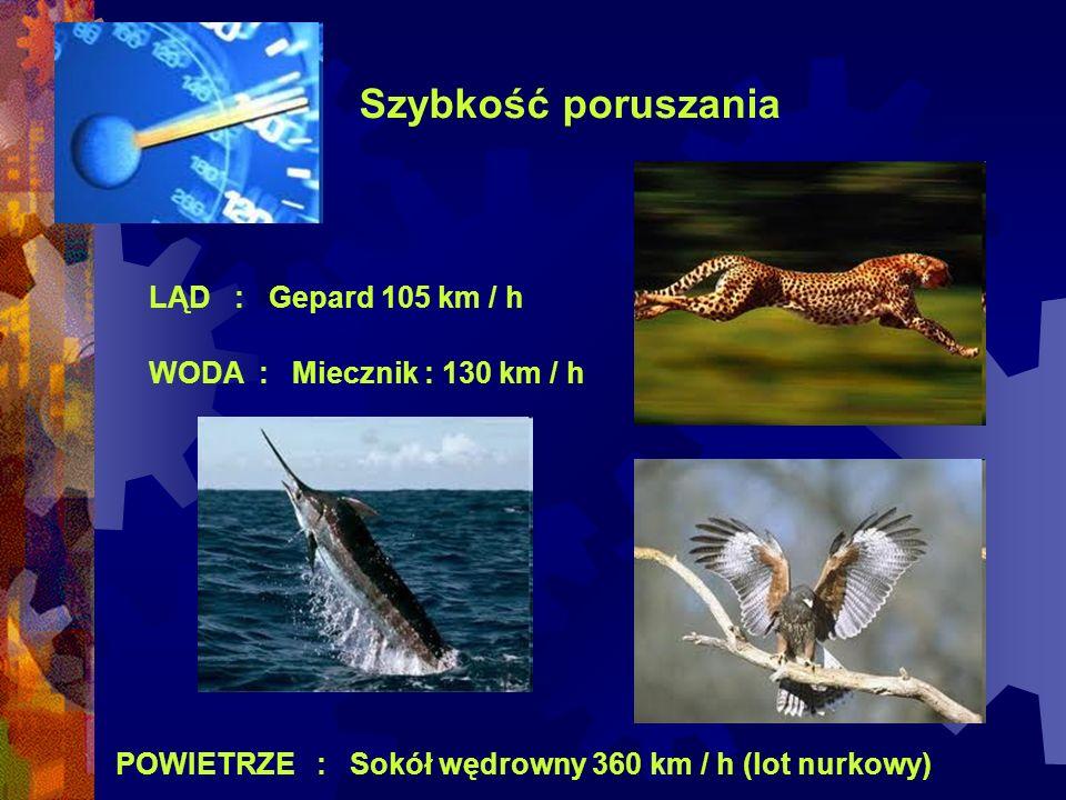 Szybkość poruszania LĄD : Gepard 105 km / h