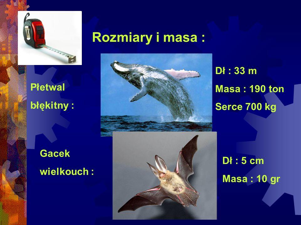 Rozmiary i masa : Dł : 33 m Masa : 190 ton Serce 700 kg Płetwal