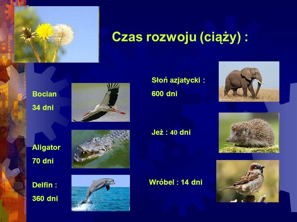 Czas rozwoju (ciąży) : Słoń azjatycki : 600 dni Bocian 34 dni