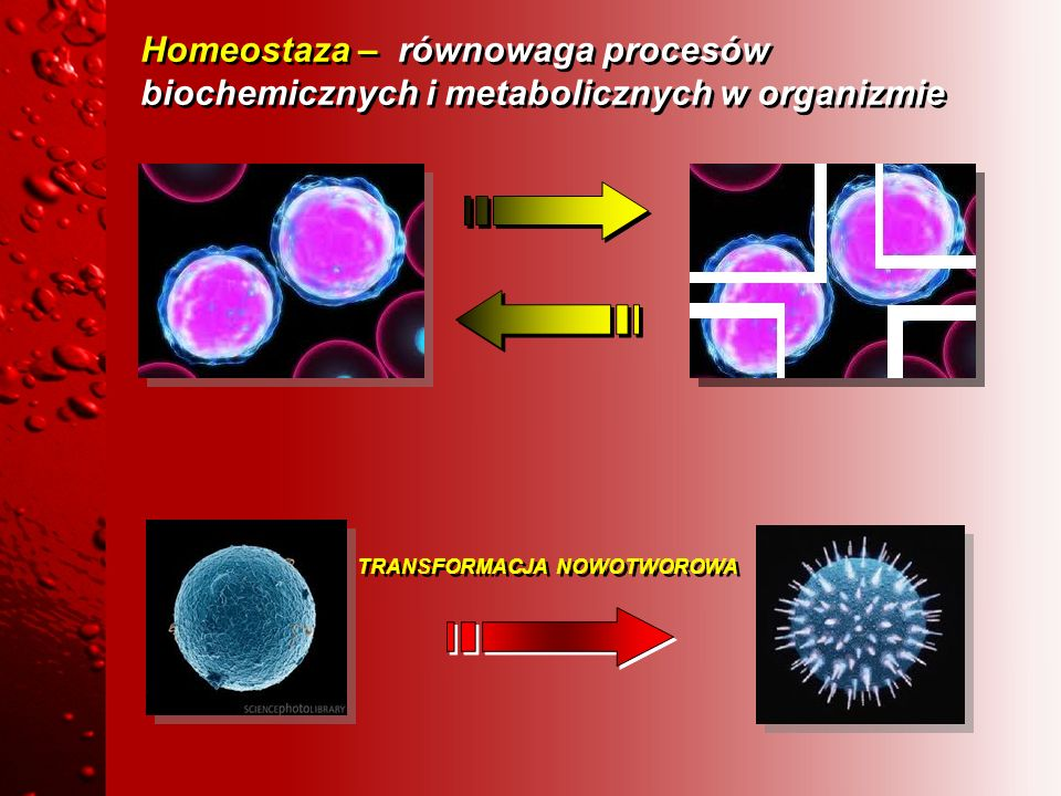 Homeostaza – równowaga procesów biochemicznych i metabolicznych w organizmie