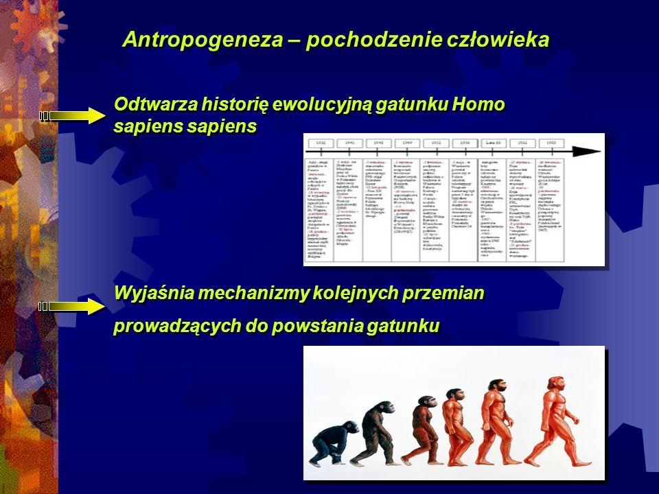 Antropogeneza – pochodzenie człowieka