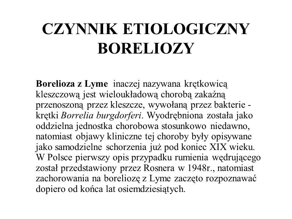 CZYNNIK ETIOLOGICZNY BORELIOZY