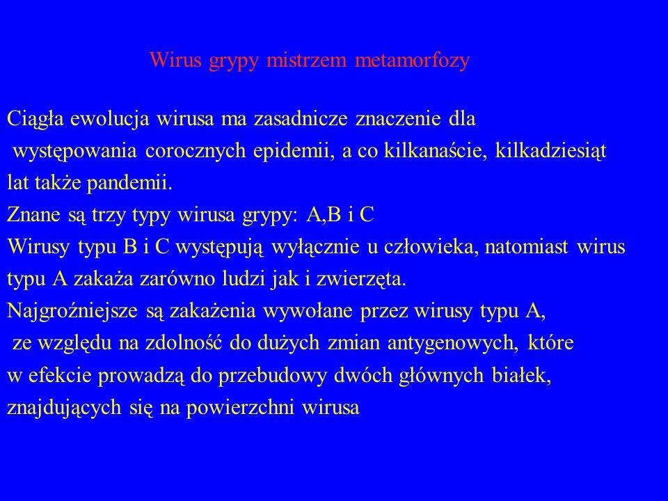 Wirus grypy mistrzem metamorfozy