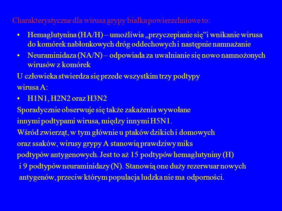 Charakterystyczne dla wirusa grypy białka powierzchniowe to: