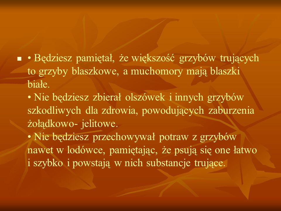 • Będziesz pamiętał, że większość grzybów trujących to grzyby blaszkowe, a muchomory mają blaszki białe.