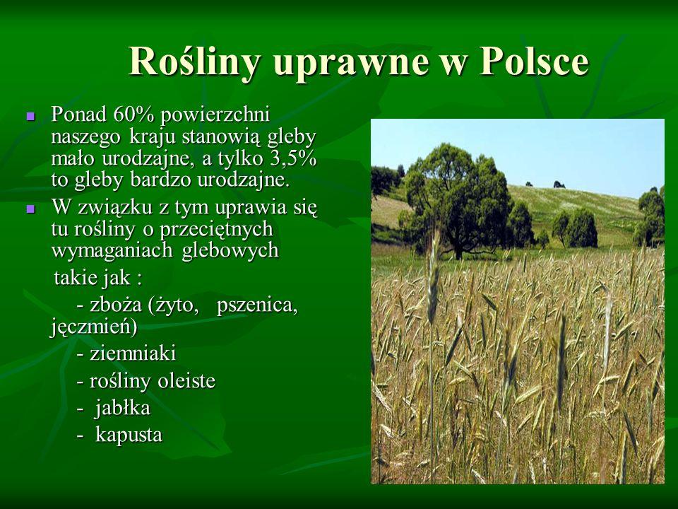 Rośliny uprawne w Polsce