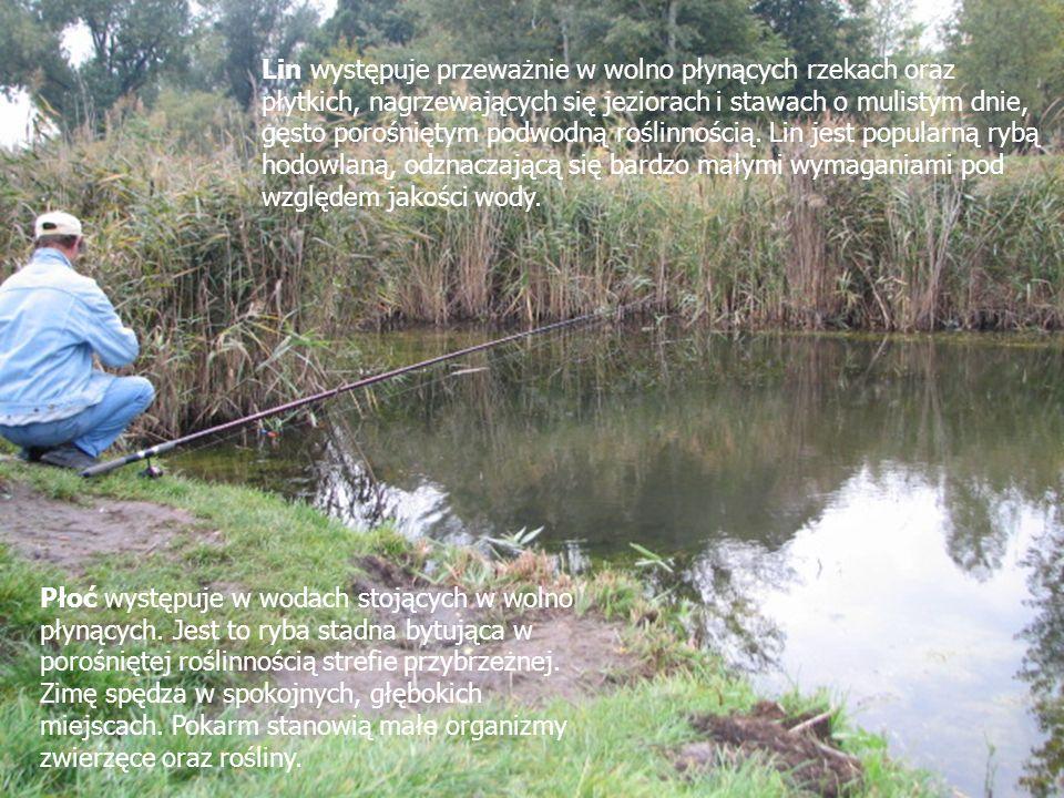 Lin występuje przeważnie w wolno płynących rzekach oraz płytkich, nagrzewających się jeziorach i stawach o mulistym dnie, gęsto porośniętym podwodną roślinnością. Lin jest popularną rybą hodowlaną, odznaczającą się bardzo małymi wymaganiami pod względem jakości wody.