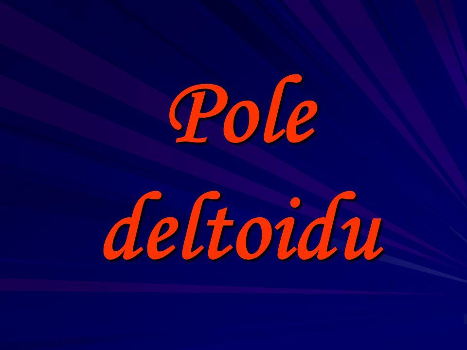 Pole deltoidu