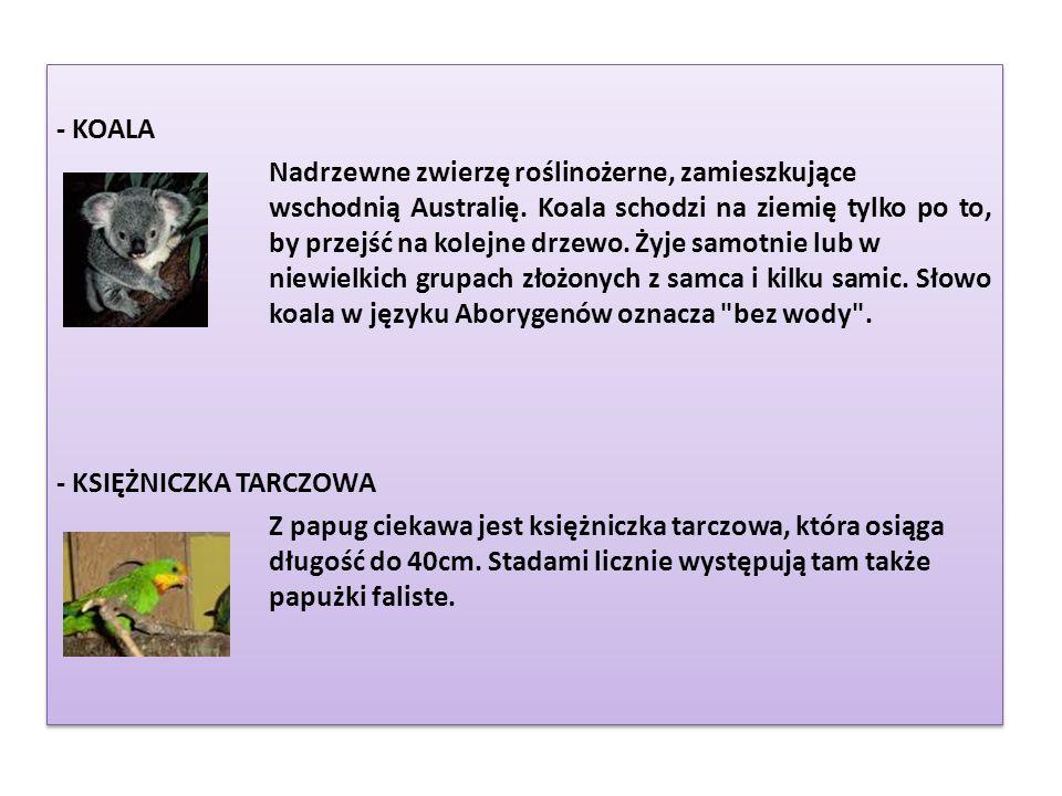 - KOALA