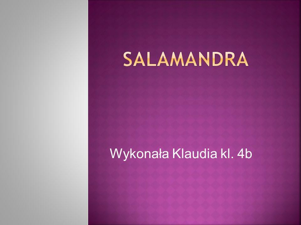 SALAMANDRA Wykonała Klaudia kl. 4b
