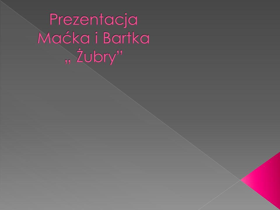 """Prezentacja Maćka i Bartka """" Żubry"""