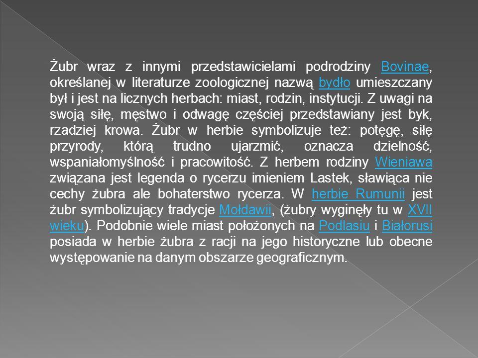 Żubr wraz z innymi przedstawicielami podrodziny Bovinae, określanej w literaturze zoologicznej nazwą bydło umieszczany był i jest na licznych herbach: miast, rodzin, instytucji.