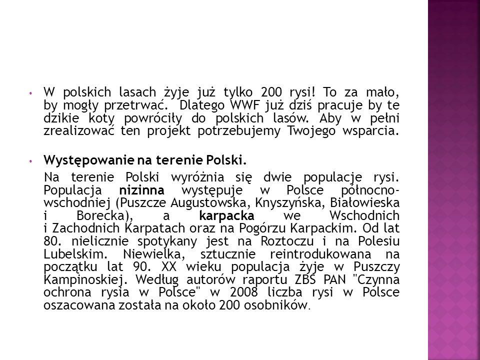 W polskich lasach żyje już tylko 200 rysi