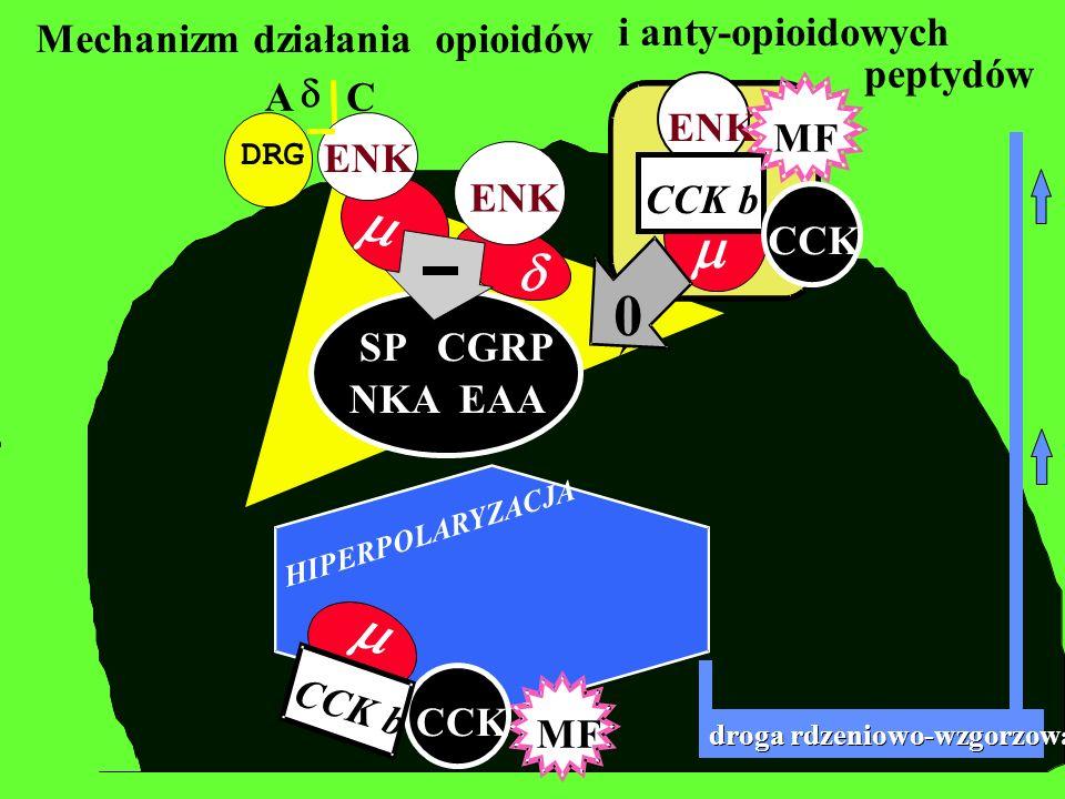 m m m d ENK CCK b MF CCK peptydów i anty-opioidowych