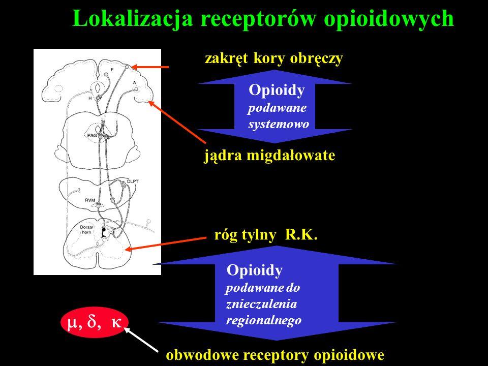 Lokalizacja receptorów opioidowych