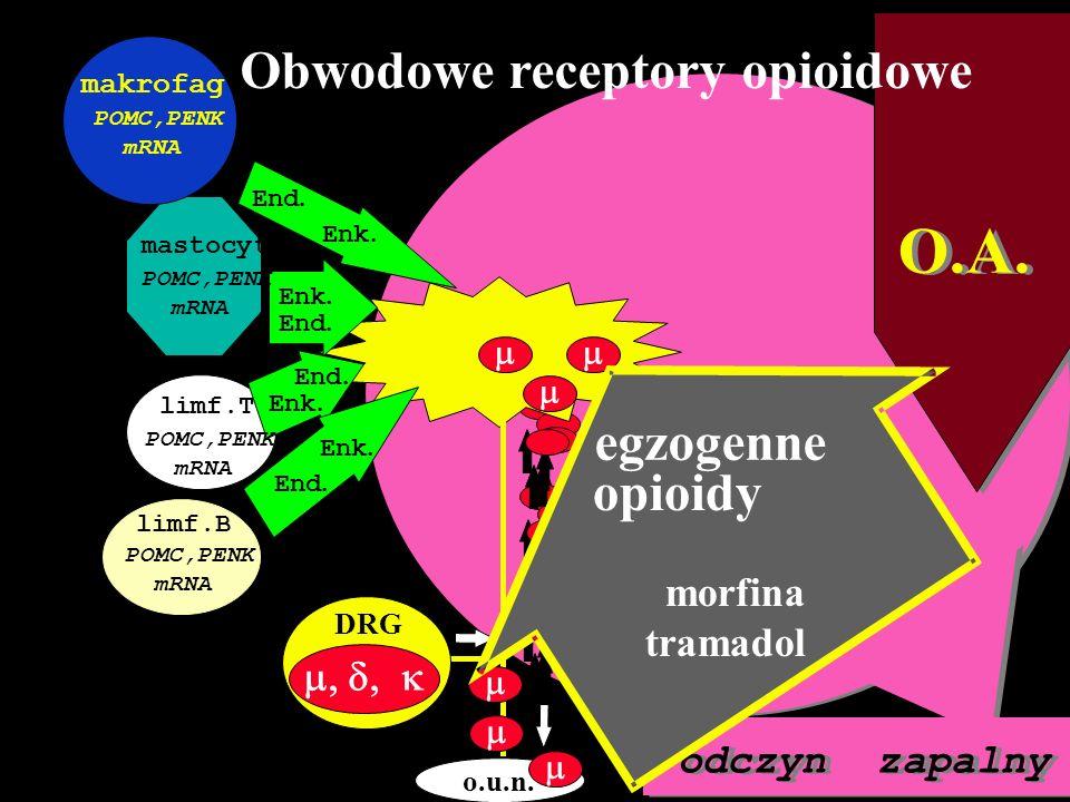 O.A. Obwodowe receptory opioidowe egzogenne opioidy stres CRF IL-1