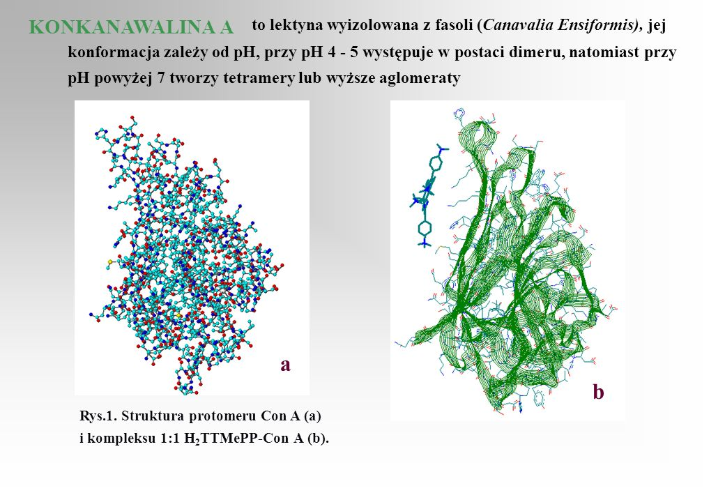 to lektyna wyizolowana z fasoli (Canavalia Ensiformis), jej konformacja zależy od pH, przy pH 4 - 5 występuje w postaci dimeru, natomiast przy pH powyżej 7 tworzy tetramery lub wyższe aglomeraty