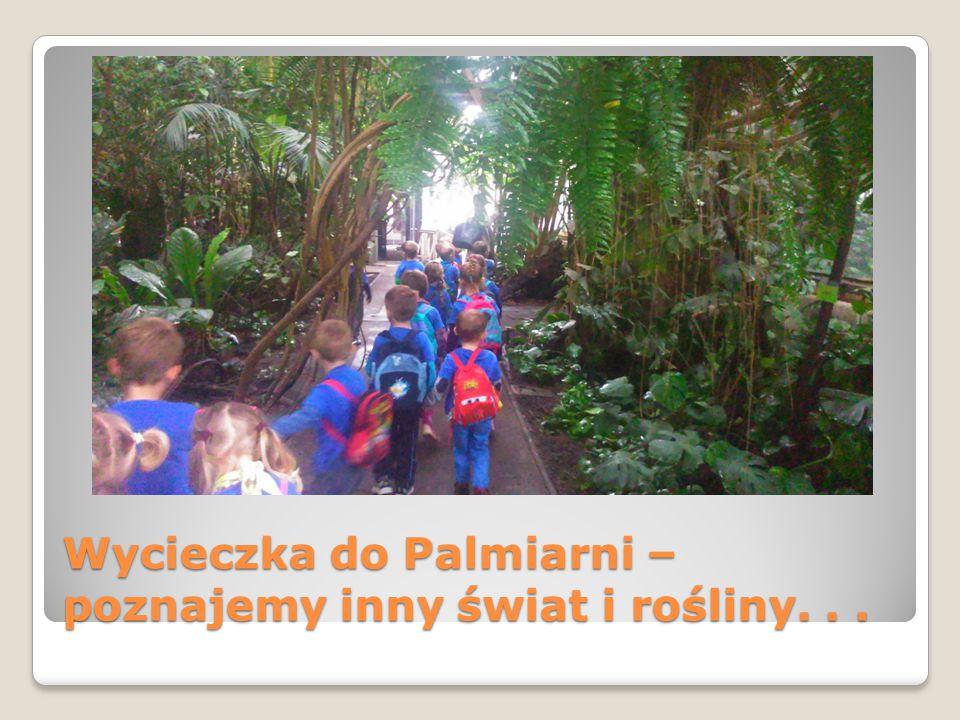 Wycieczka do Palmiarni – poznajemy inny świat i rośliny. . .