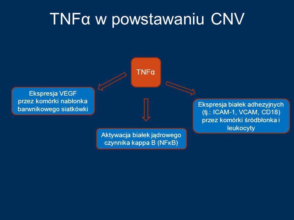 TNFα w powstawaniu CNV TNFα Ekspresja VEGF