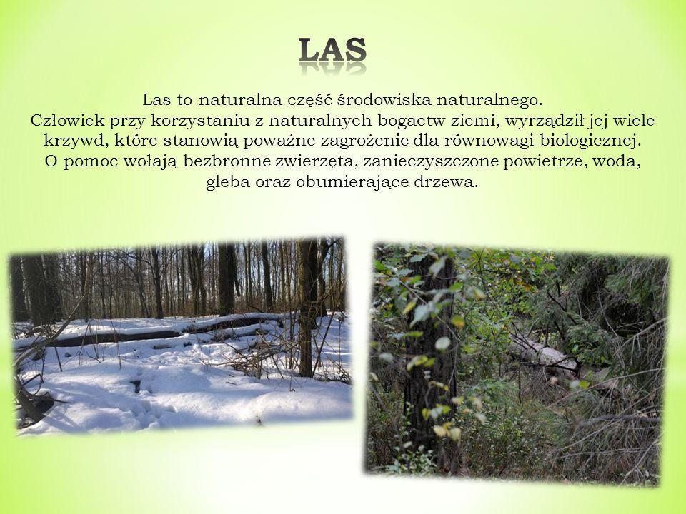 Las to naturalna część środowiska naturalnego.