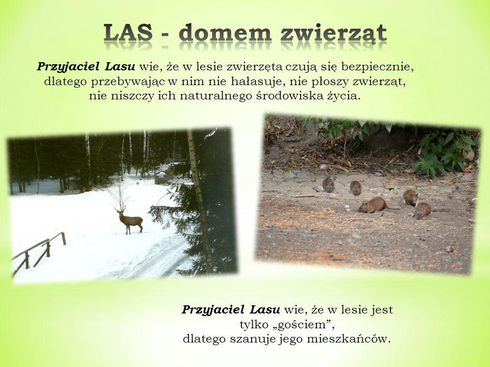 LAS - domem zwierząt Przyjaciel Lasu wie, że w lesie zwierzęta czują się bezpiecznie, dlatego przebywając w nim nie hałasuje, nie płoszy zwierząt,
