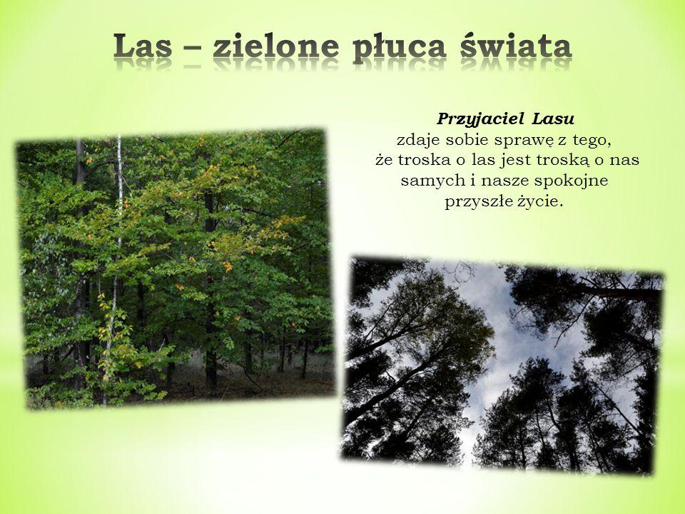 Las – zielone płuca świata