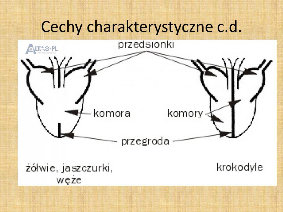 Cechy charakterystyczne c.d.