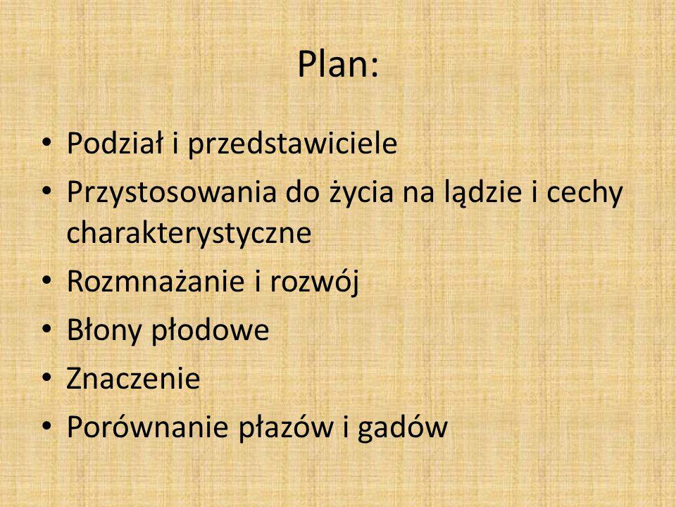Plan: Podział i przedstawiciele