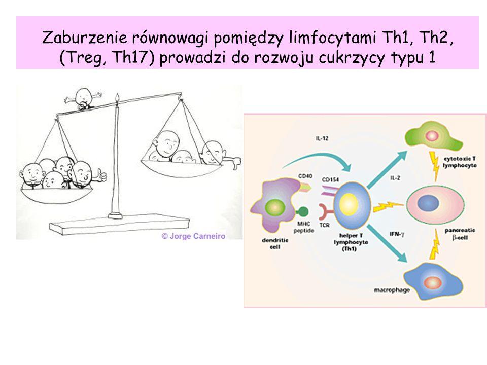 Zaburzenie równowagi pomiędzy limfocytami Th1, Th2, (Treg, Th17) prowadzi do rozwoju cukrzycy typu 1
