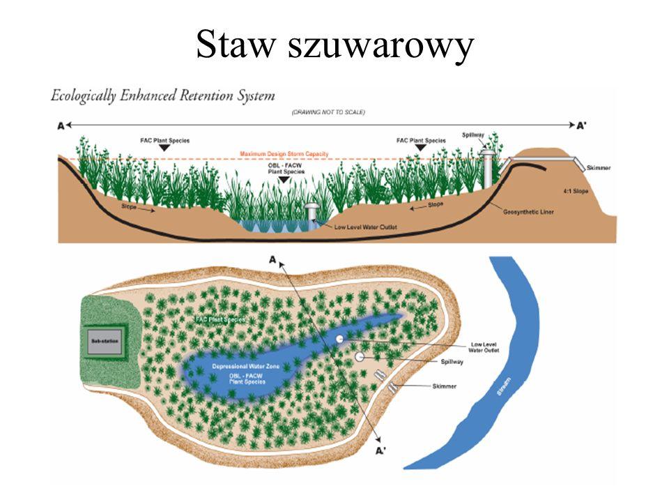 Staw szuwarowy