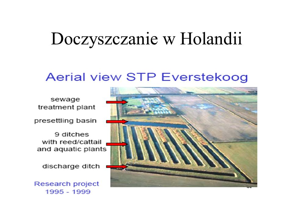 Doczyszczanie w Holandii