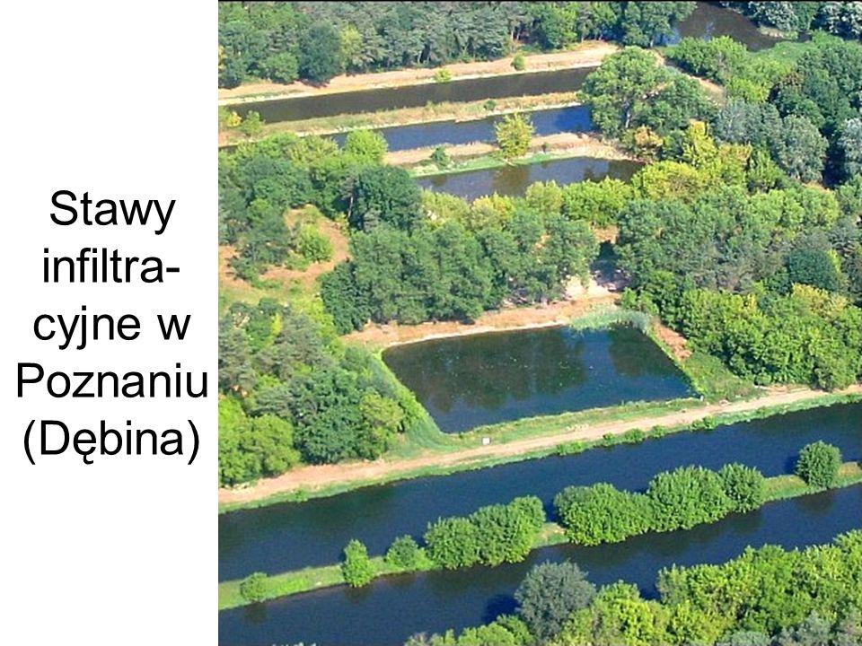 Stawy infiltra- cyjne w Poznaniu (Dębina)