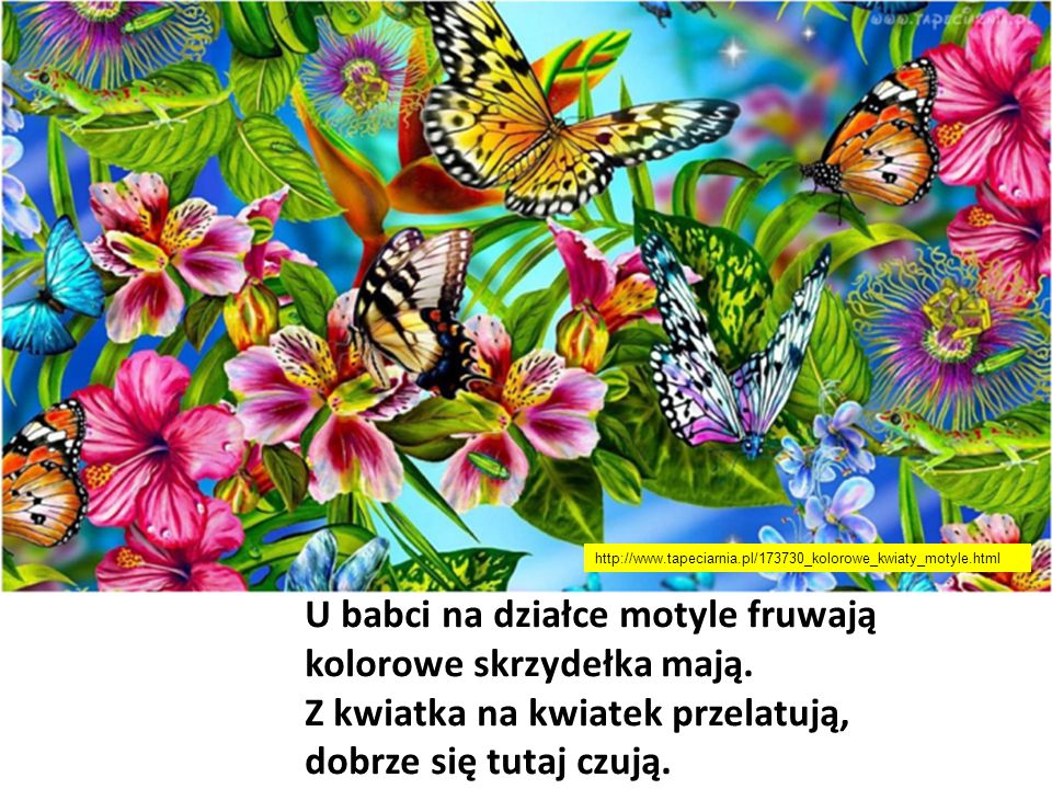 U babci na działce motyle fruwają kolorowe skrzydełka mają.