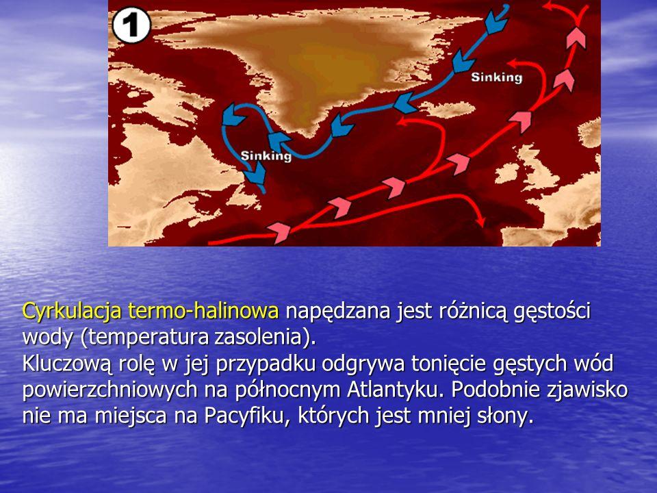Cyrkulacja termo-halinowa napędzana jest różnicą gęstości wody (temperatura zasolenia).