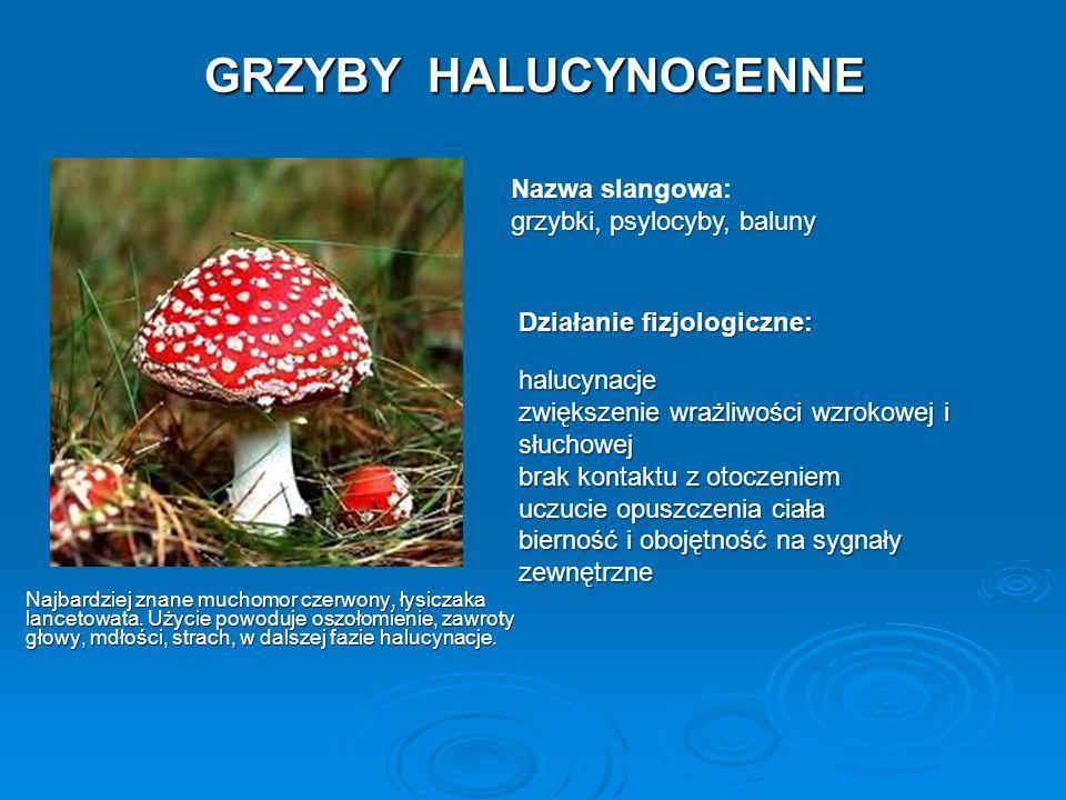 GRZYBY HALUCYNOGENNE Nazwa slangowa: grzybki, psylocyby, baluny