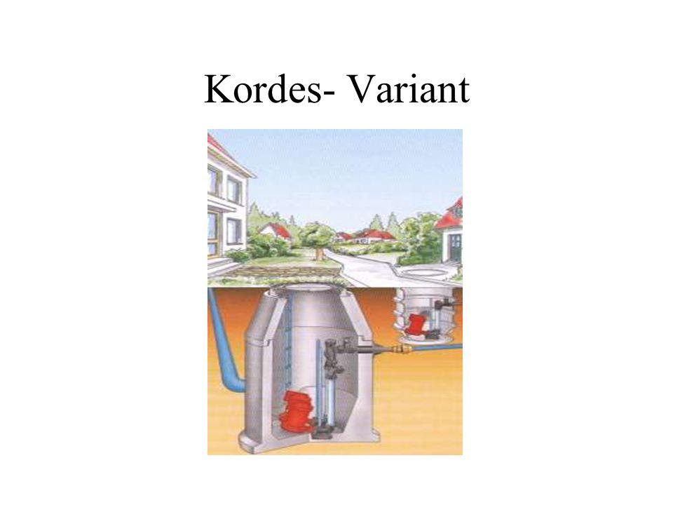 Kordes- Variant