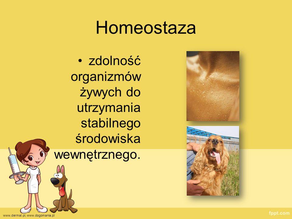 Homeostaza zdolność organizmów żywych do utrzymania stabilnego środowiska wewnętrznego.
