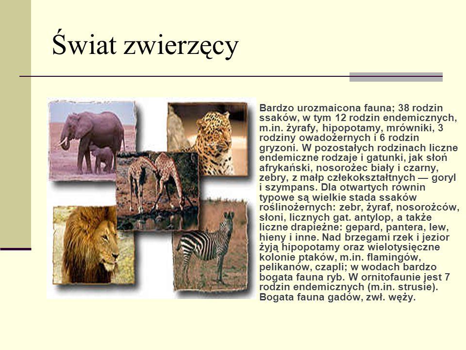 Świat zwierzęcy