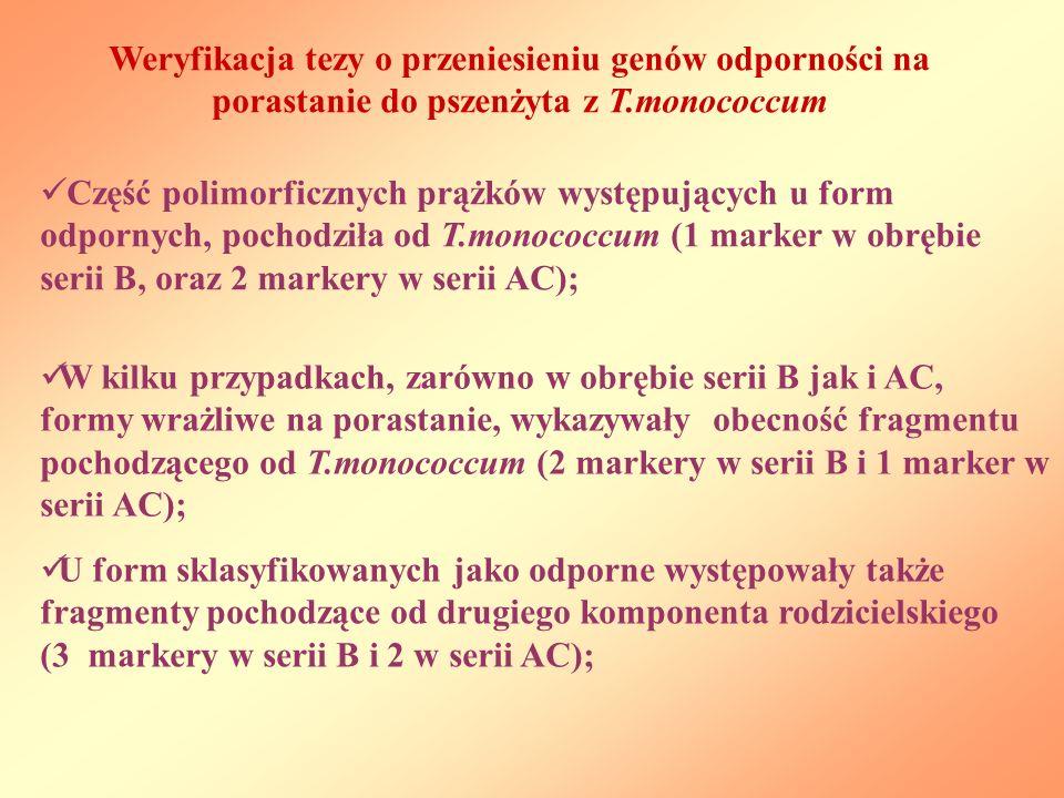 Weryfikacja tezy o przeniesieniu genów odporności na porastanie do pszenżyta z T.monococcum