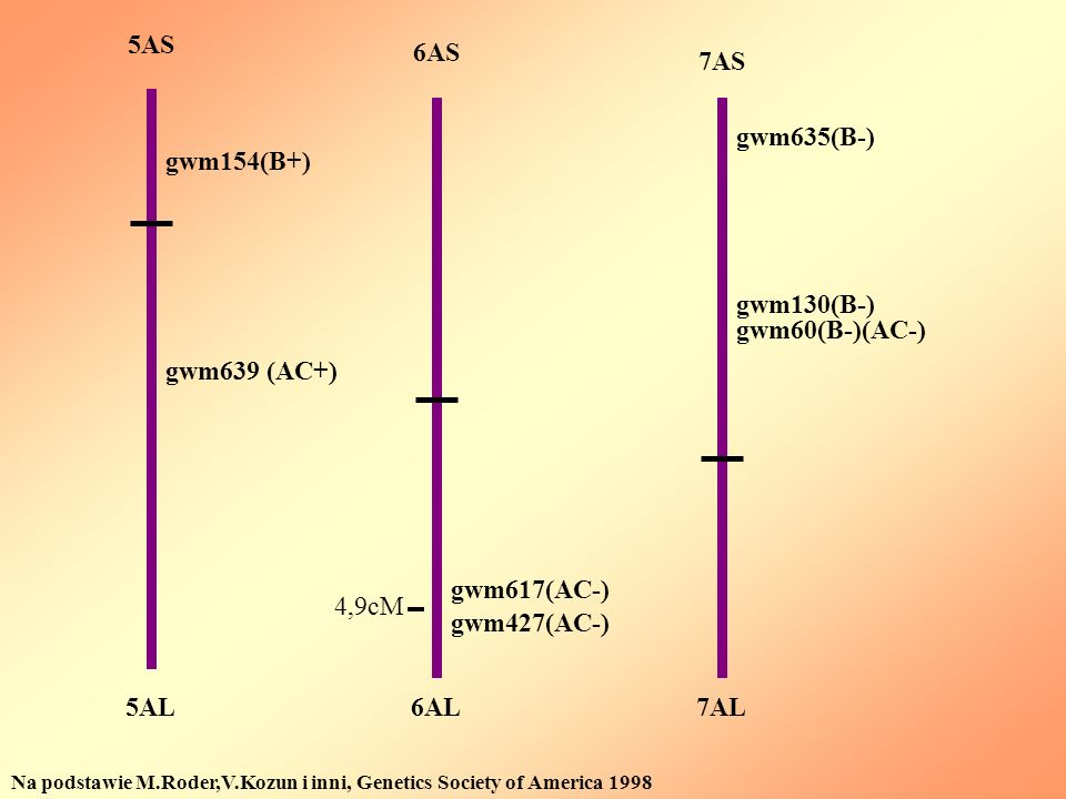 5AS 6AS 7AS gwm635(B-) gwm154(B+) gwm130(B-) gwm60(B-)(AC-)