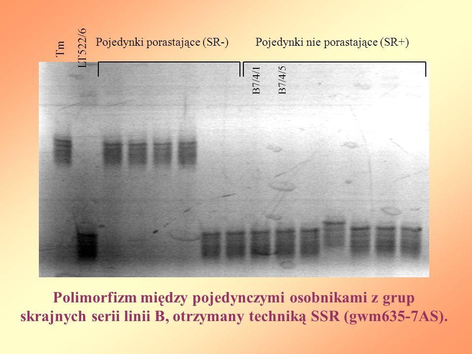 LT522/6 Pojedynki porastające (SR-) Pojedynki nie porastające (SR+) Tm. B7/4/1. B7/4/5.