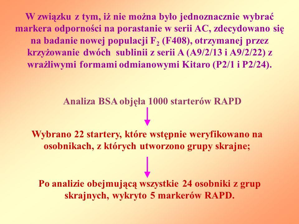 W związku z tym, iż nie można było jednoznacznie wybrać markera odporności na porastanie w serii AC, zdecydowano się na badanie nowej populacji F2 (F408), otrzymanej przez krzyżowanie dwóch sublinii z serii A (A9/2/13 i A9/2/22) z wrażliwymi formami odmianowymi Kitaro (P2/1 i P2/24).